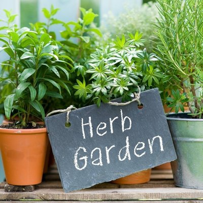 Herbs For Your Garden
