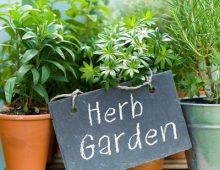 Herbs For Your Garden