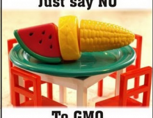 GMO Legal Measures