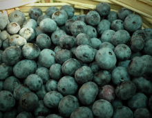 Health Facts About Blueberries
