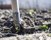Start Planting Your Fall garden!