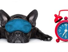 It's National Sleep Awareness Month!