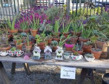 Charles Street Gardens Plant sale