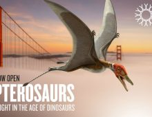 Pterosaurs: Flight in the Age of Dinosaurs is on view at the California Academy of Sciences through January 7, 2018