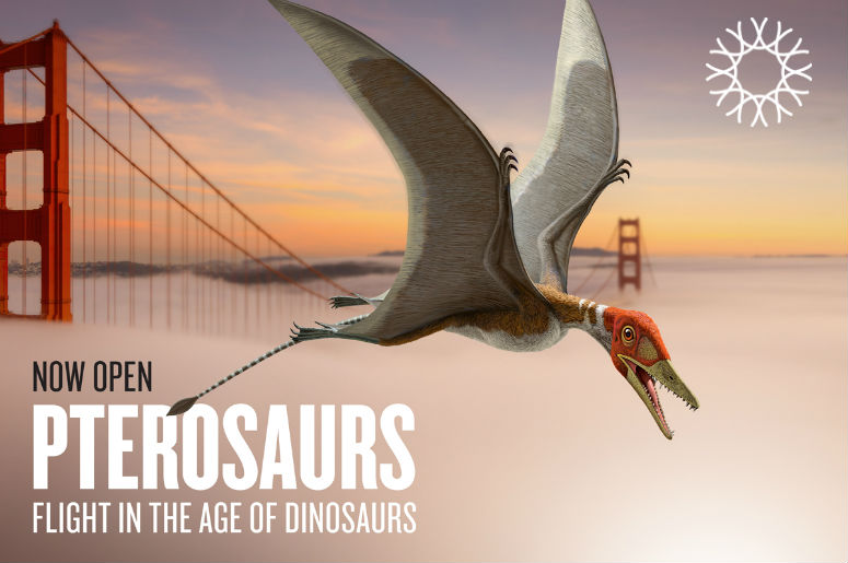 Pterosaurs: Flight in the Age of Dinosaurs is on view at the California Academy of Sciences through January 7, 2018.