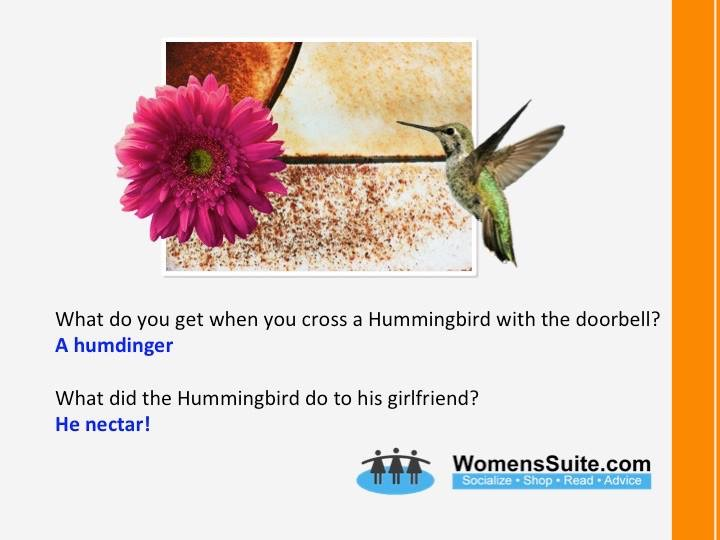 What do you get when you cross a Hummingbird with the doorbell? A humdinger