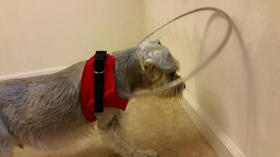 The Original Blind Dog Halo Vest