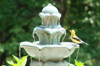 Copper's Effect on Birds and Bird Baths