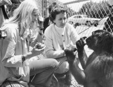 Koko The Gorilla Dies; A Bay Area Treasurer