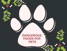 Dangerous Foods For Our Pets