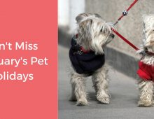 FEBRUARY PET HOLIDAYS