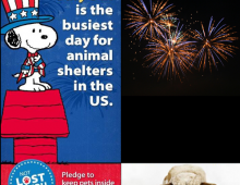 July 5th Busiest Day for Animal Shelters