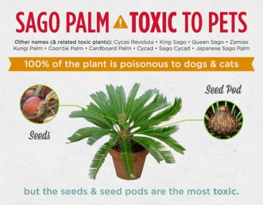 Sago Palms are poisonous to Dogs and Cats