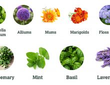 Plants and Herbs that Repel Insects